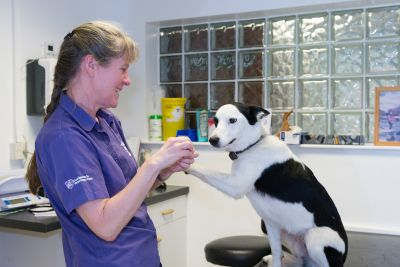 Whilst we wait for one vaccine lets not forget about others! Keep up to date with pet vaccinations.