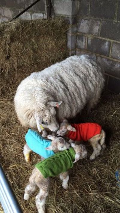 Smallholder Lambing Workshop