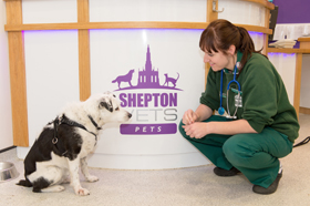 Shepton Vets Pets team Nurse and dog