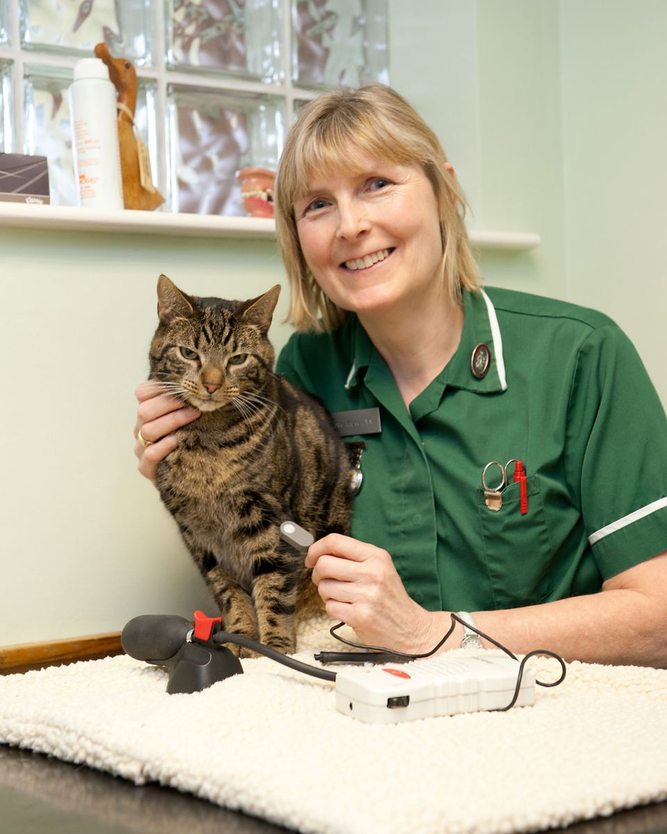 Vet nurse and cat