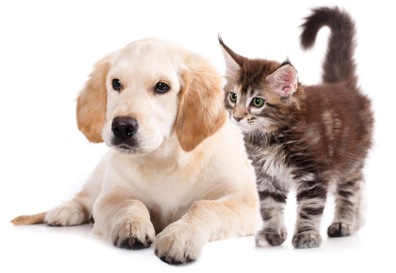 Image of cat and dog