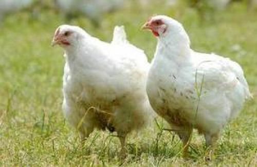 Poultry keepers advised to keep flocks inside for next 30 days