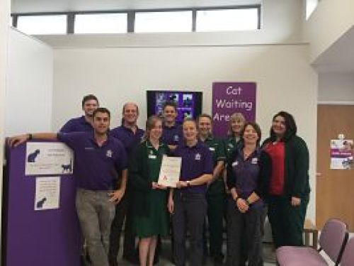 Practice awarded Gold status as Cat Friendly Clinic