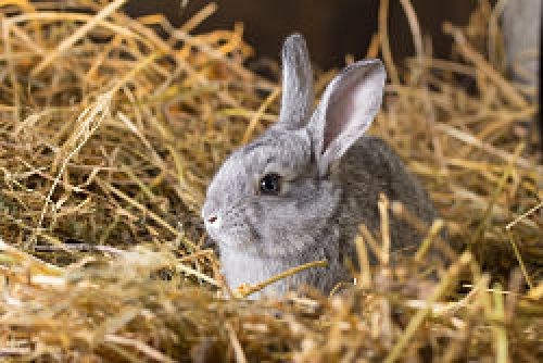 Rabbit Vaccination Clinic